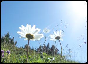 青物横丁徒歩5分心と身体を癒す NaturalTherapy YURARI-ゆらり-